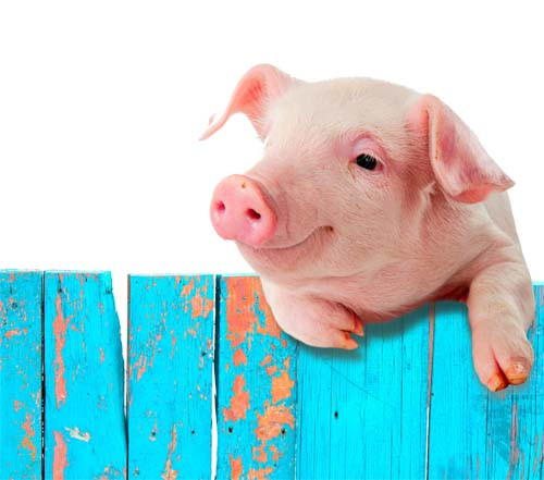 Don't Try to Teach a Pig to Sing | Soar With Your Strengths